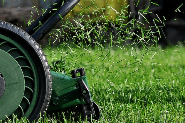 lawn-clippings